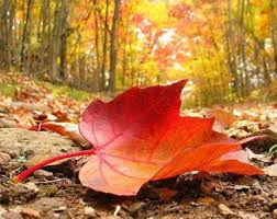 colori d'autunno4